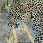 Leopard Sighting - Day Drive (offroading)