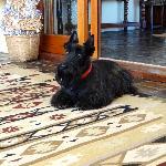 sweet Hotel Dog