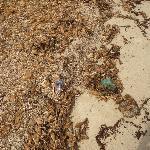 Ungepflegter, verschmutzter Strand!