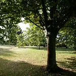 in the shade of the Linden tree