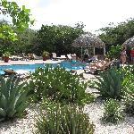 Mooie tuin met het zwembad