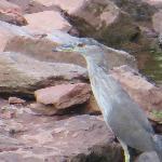 Bird at creek