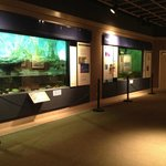 several different aquariums based on Texas ecosystems