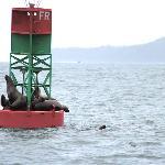 Sea Lions (6-30-12)