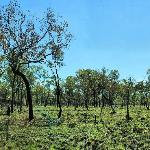 Savannah woodlands at Undara Lava Tubes Qld Au