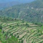 Terrace farming in the village
