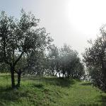 The beautiful and peaceful olive farm just behind the house with great views over Florence