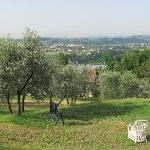 Another wonderful view from the olive farm just behind the house