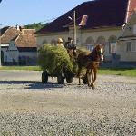 Village Life !