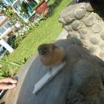 We met the little bird lost from her mom