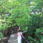 Walk from the villa to the backwaters