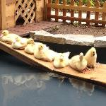 Duck pond at Jardin du Ritz. I finally have all my ducks in a row!