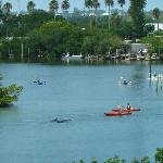 In Coral Creek as kayakers watch the dolphins