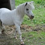 Streichelzoo - Ponny Jonny