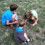 bug finding activity from the park