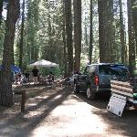 Camp site 246