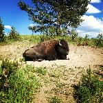 This lazy bison welcomed us as we drove into the lot at Artist Point.