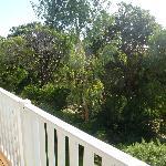 Treetops from the balcony