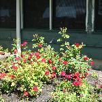 June rose garden