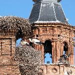 A 5 km. de Alfaro la población con más cigüeñas de España