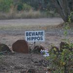 Beware...Hippos !
