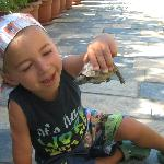 my son with the tortoise which roam around the hotel
