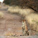 Roadside Cheetah spotted by the Gomo Gomo Team