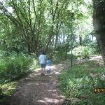 森林をお散歩