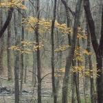 woodland, Bonham State Park, Texas.