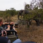 photographing elephants
