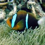 diving is solomons