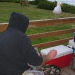 'Gilbert' the seagull - regular visitor!