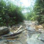 Franconia Notch - Falling Water Falls Trail