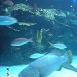 Large aquarium in center of restaurant