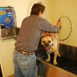 Check out this Dog-Bath! Too doggone cool!