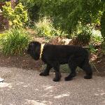 Bear - the resident mascot