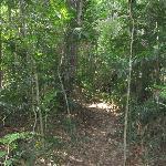 Trail to Corcovado