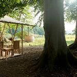 Woodland setting