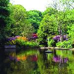 Milntown Mill Pond