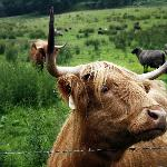 One of the Coos