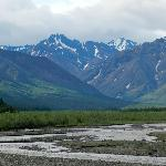 Scenery at Denali National Park