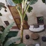Le deuxième patio et le bananier