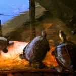 Turtle's chilling