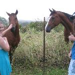 Feeding the horses on Ekena property