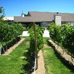 Small grape plot outside office