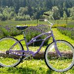 Beach Bike at Lavender Farm