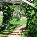 The trellis green with hops vines