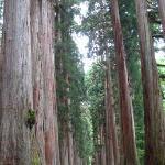 杉並木が感動するほど美しい!!