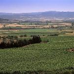 le vigne di Pala