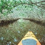 Kayaking in through the mangroves